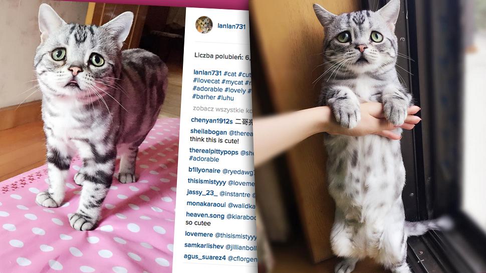 Najsmutniejszy Kot Na świecie Wcale Nie Jest Smutny